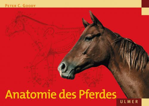 Anatomie des Pferdes cover