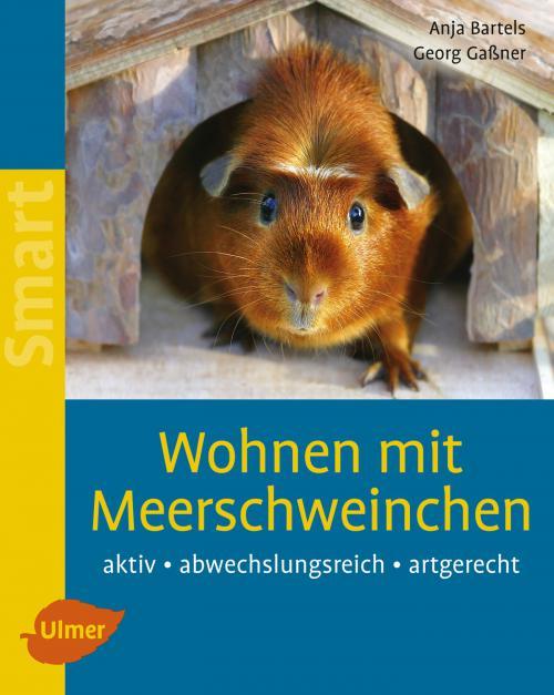 Wohnen mit Meerschweinchen cover