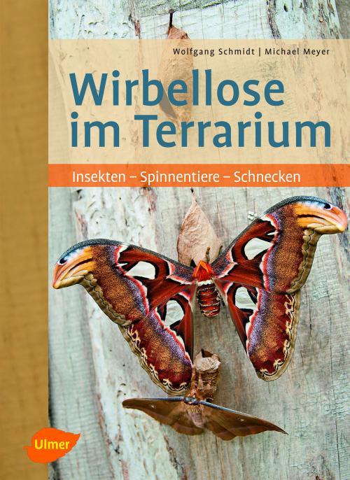 Wirbellose im Terrarium cover