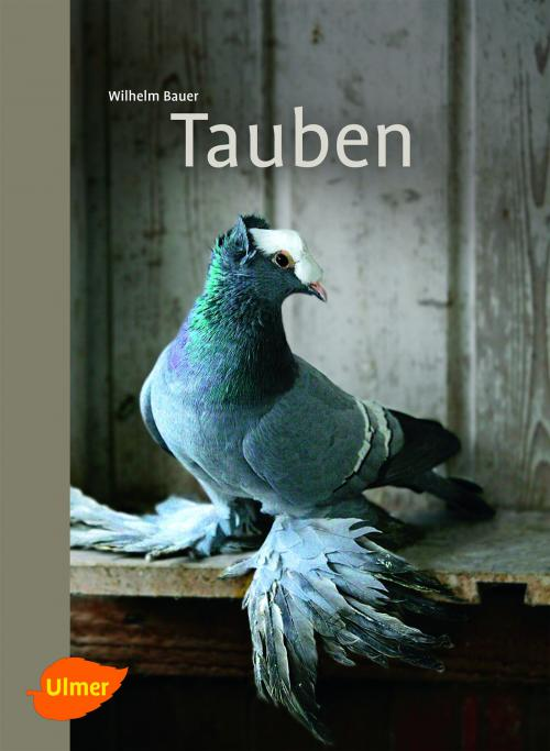 Tauben cover